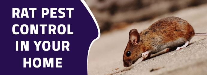 pest control in your home