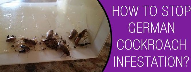 How To Stop German Cockroach Infestation?