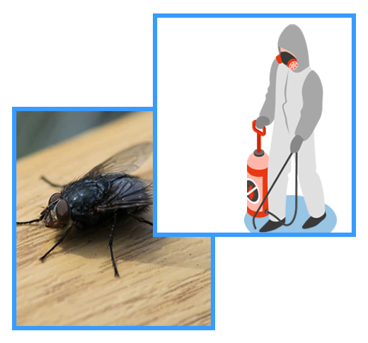 Pest Control South Morang