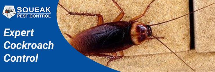 Expert Cockroach Control