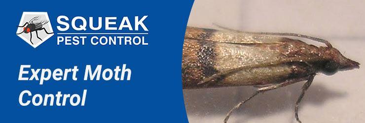 Expert Moth Control Service