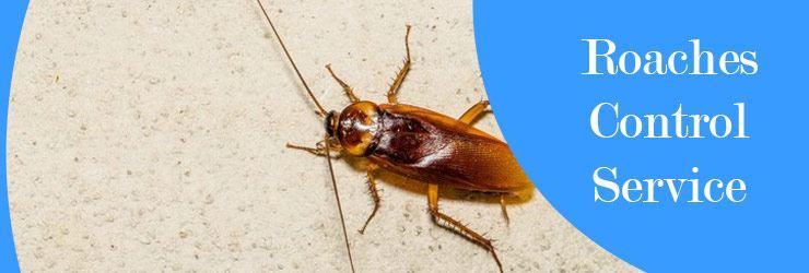 Roaches Control Service