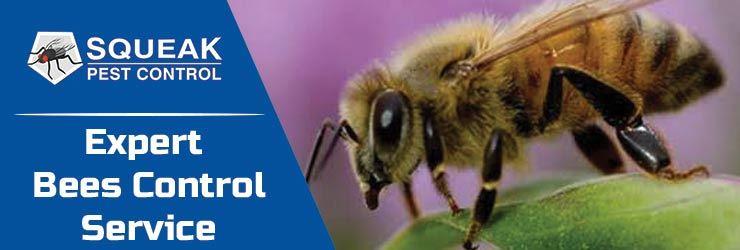 Bees Control Perth