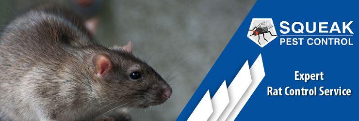 Expert Rat Control Service