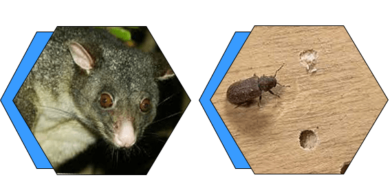 Possum and Borer Removal