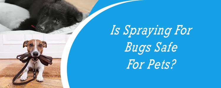 Is Spraying For Bugs Safe For Pets